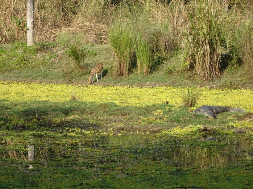 chitwan-2