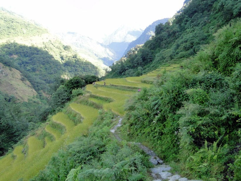 Annapurnas champs en terrasse