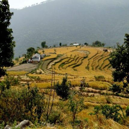 Pays Gurung